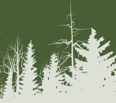 intro forest image